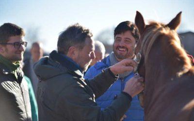 Pferdegestütztes Teambuilding für Versicherungen